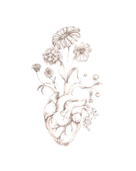 8x10quot PRINT of original drawing quotBlooming Heartquot- graphite, art, anatomy, floral, heart, valentine