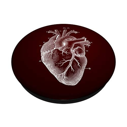 Heart Anatomical Drawing for Medical Doctor Cardiology Nurse