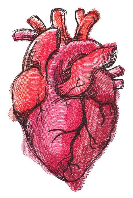 Painted Anatomical Heart | Urban Threads: Unique and Awesome Embroidery Designs - this would be a n
